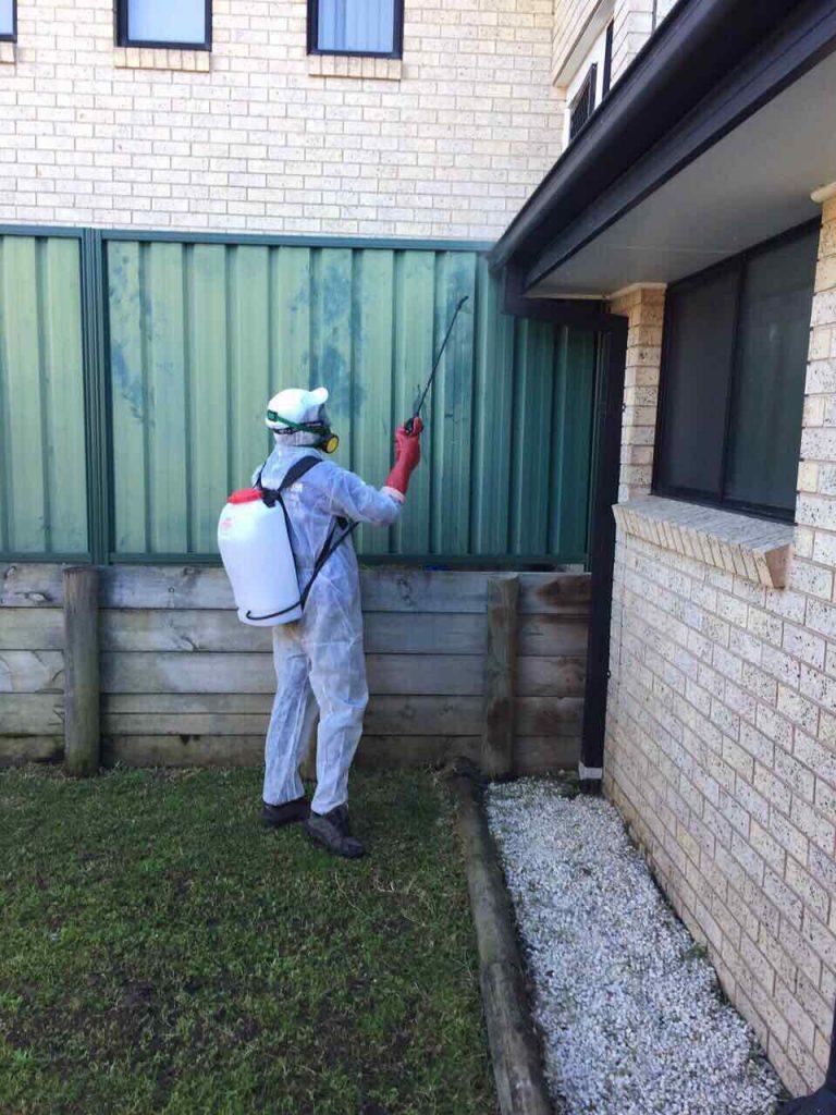 pest control corners